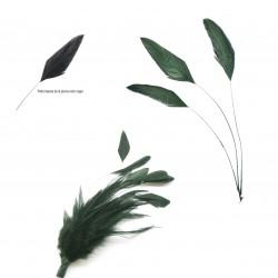 Pluma gallo 11-15 cm.