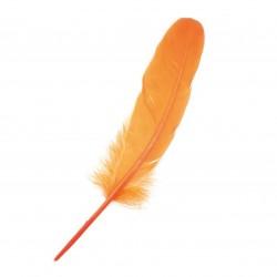 Pluma turkey 20-25 cm.